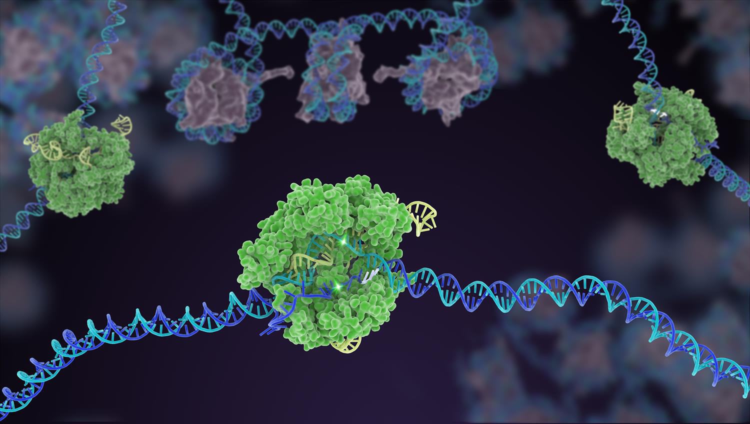 Cas9 protein involved in the CRISPR gene-editing technology