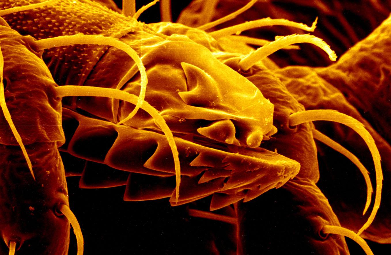 NIH strategic research plan addresses growing tickborne diseases