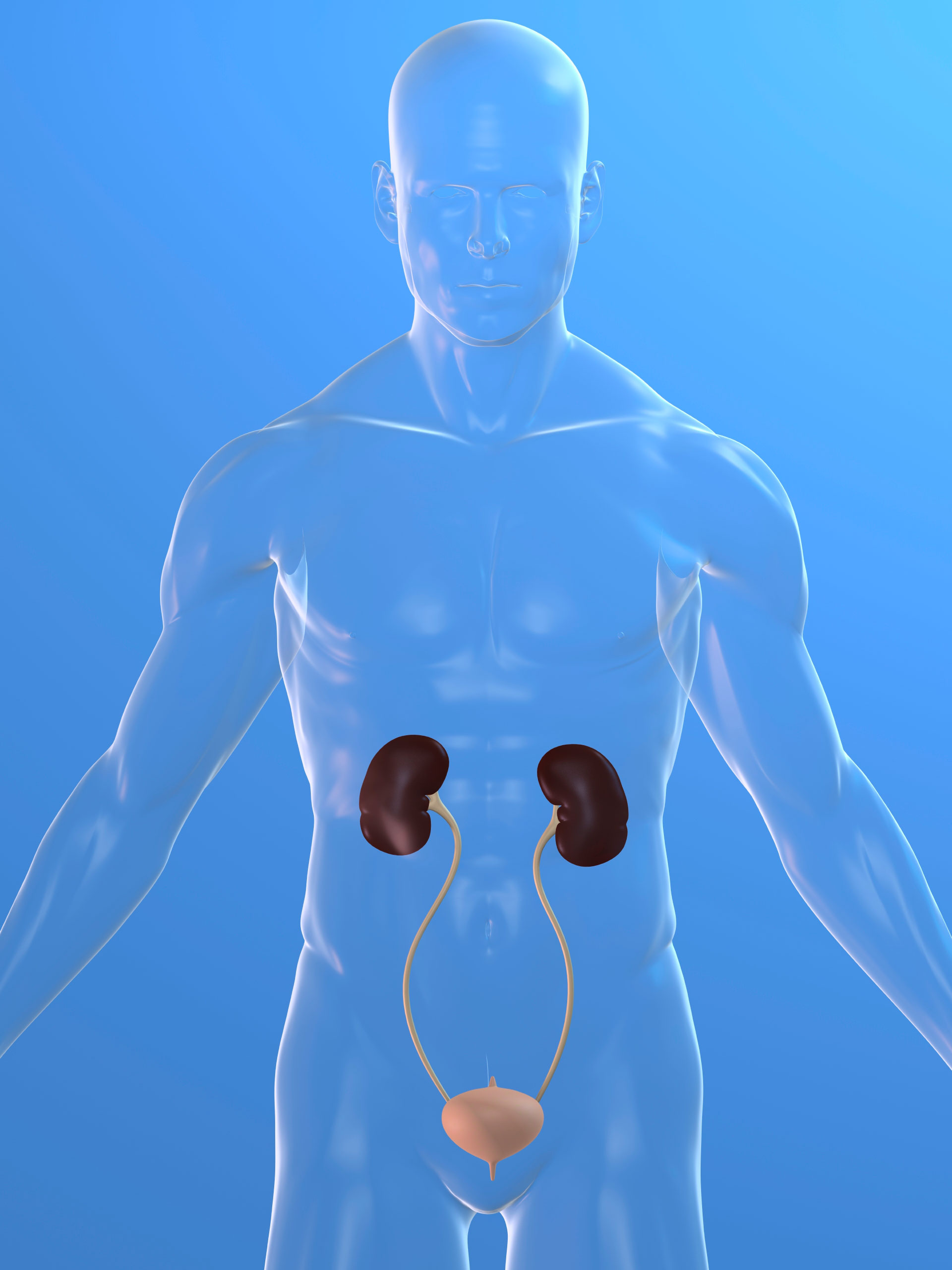 Treatment Helps With Kidney Transplants National