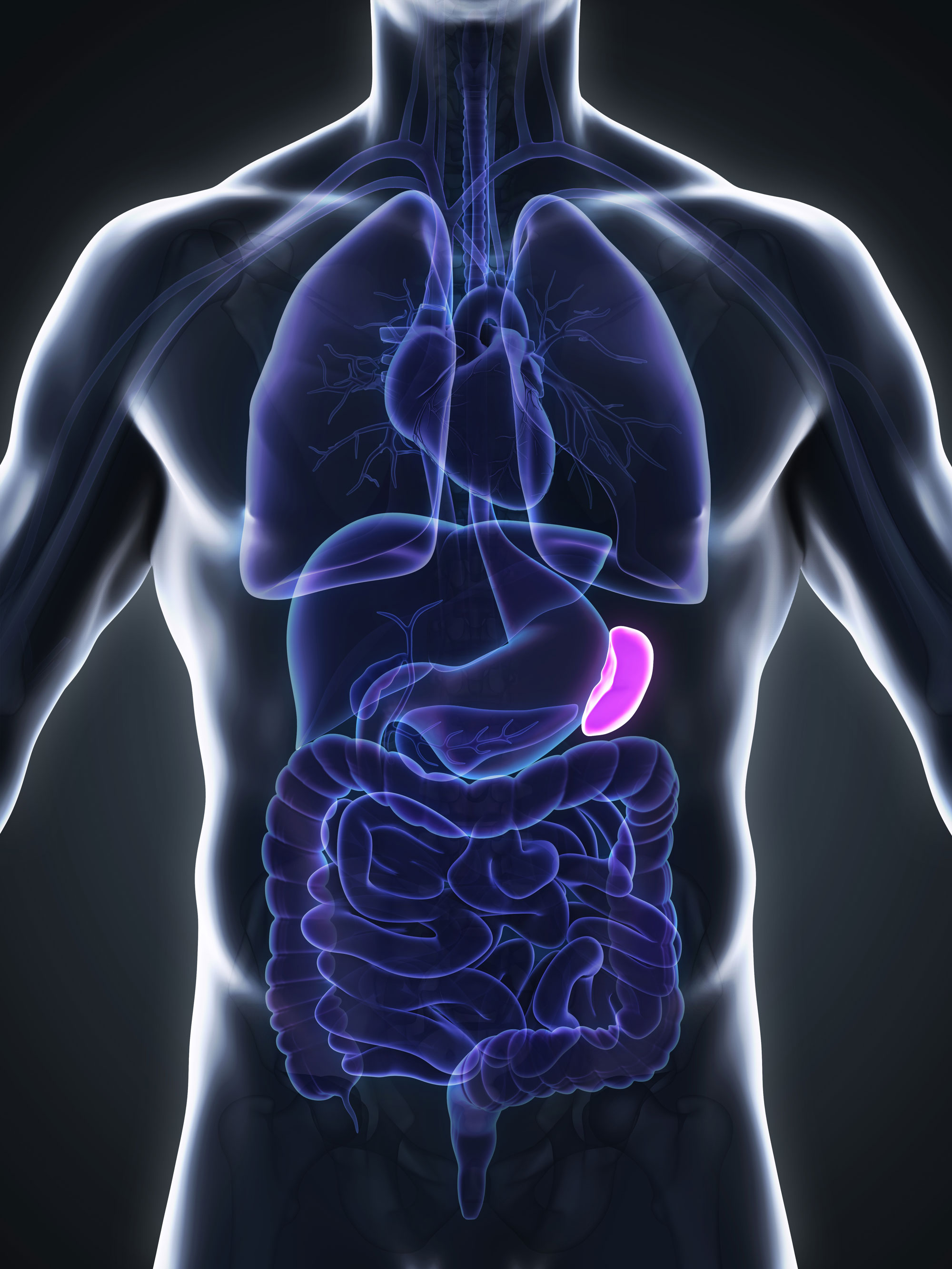 How the spleen keeps blood healthy | National Institutes of Health (NIH)