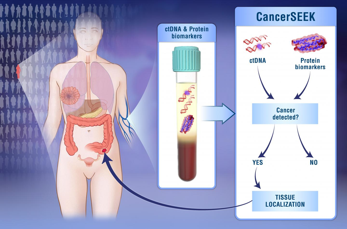 Infographic shows a body, blood with ctDNA and protein biomarkers in a tube, a CancerSEEK chart asking whether cancer is present, and the result pointing to the source of the cancer in the body