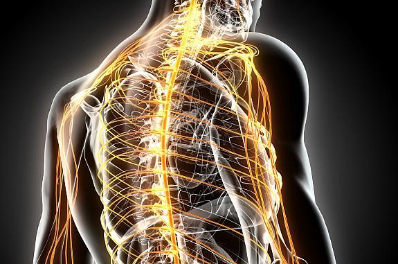 Illustration of brain and nervous system