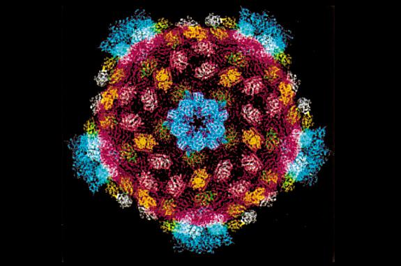 The reovirus core structure.