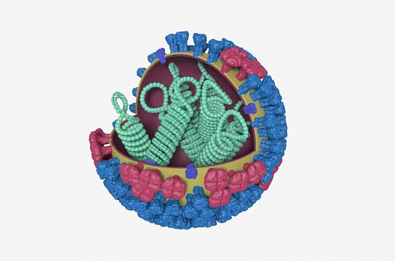 3-D model of influenza virus
