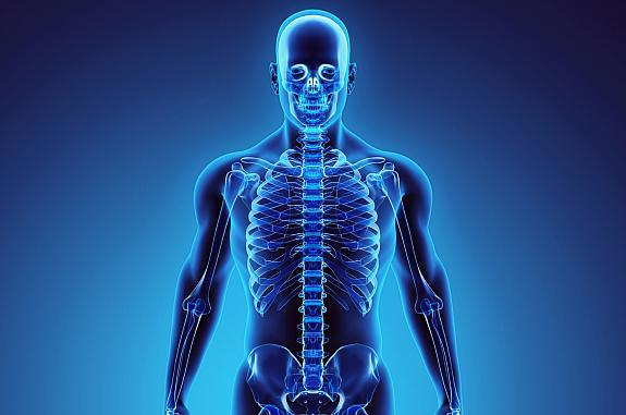 3D illustration of human skeleton