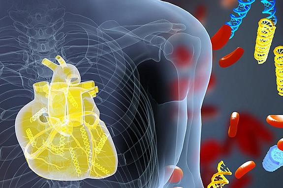 Illustration of DNA fragments and a heart in the human body