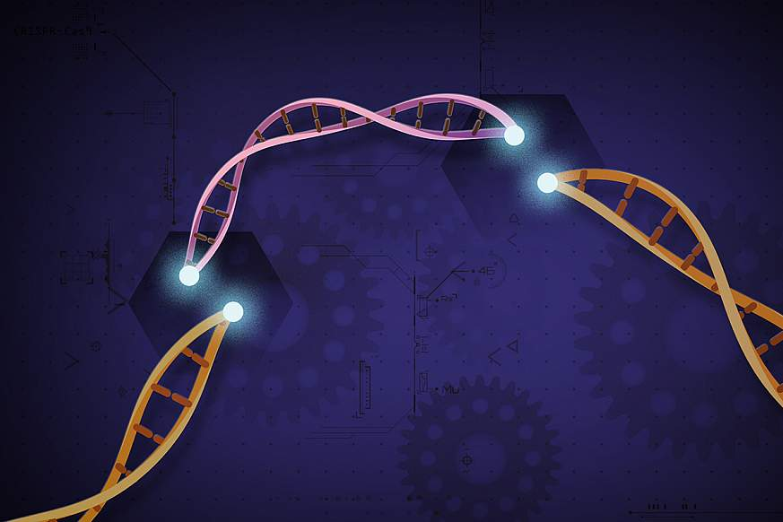 Illustration of CRISPR Cas9