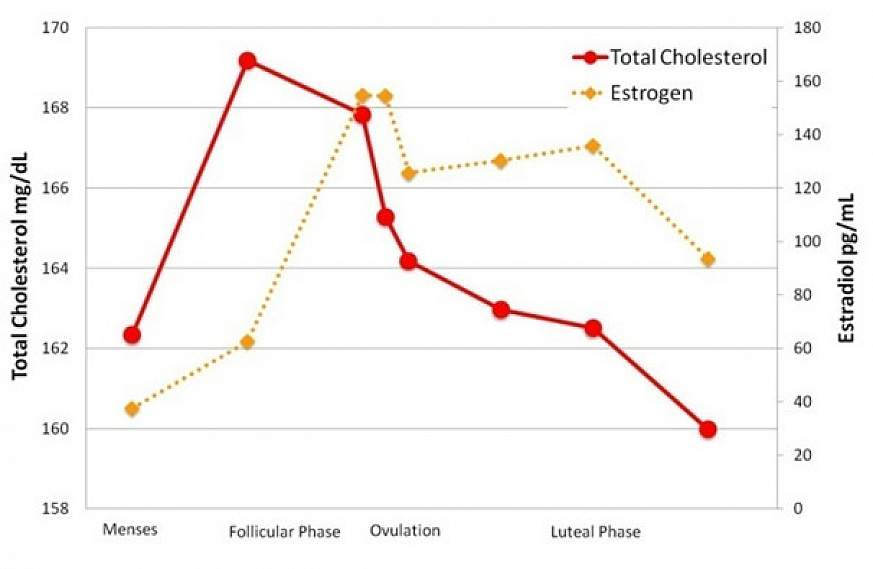 Image of graph comparing estrogen levels and total cholesterol levels to the phases of the menstrual cycle