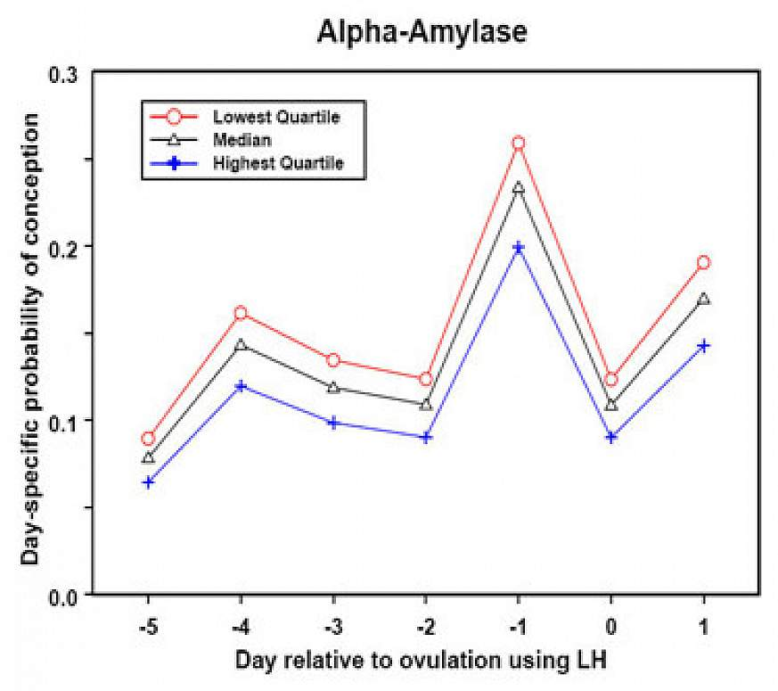 Line graph shows the saliva levels of alpha-amylase for women in the study