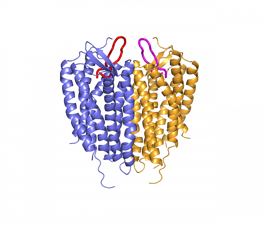 Structure of linked CXCR4 molecules bound to loop-shaped inhibitors