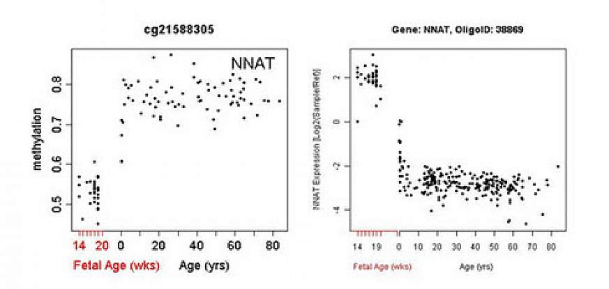 Chart of PFC methylation across lifespan