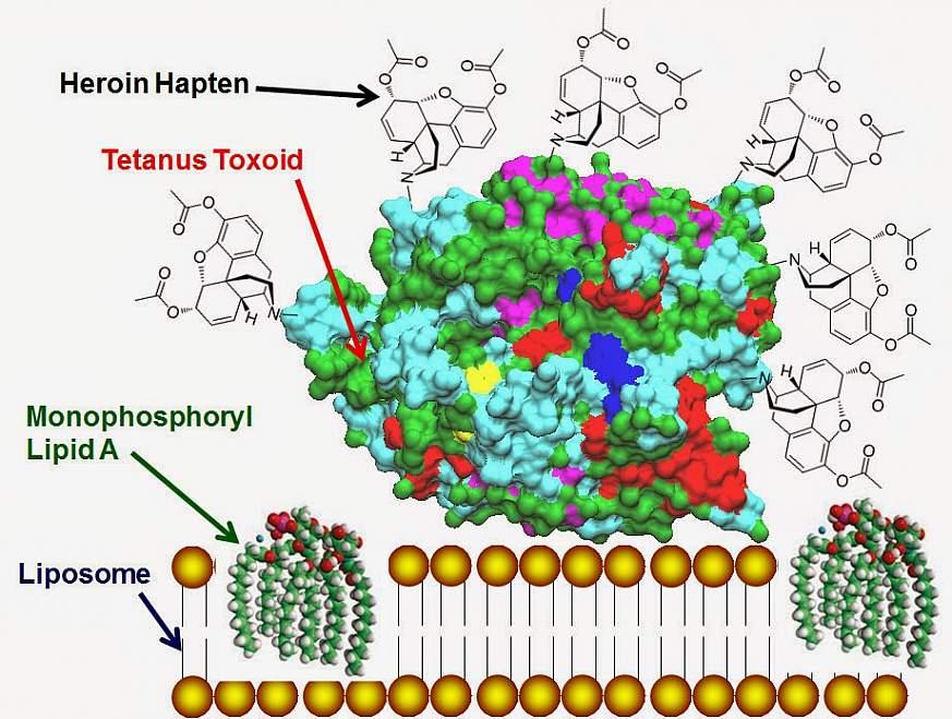 Heroin-HIV vaccine