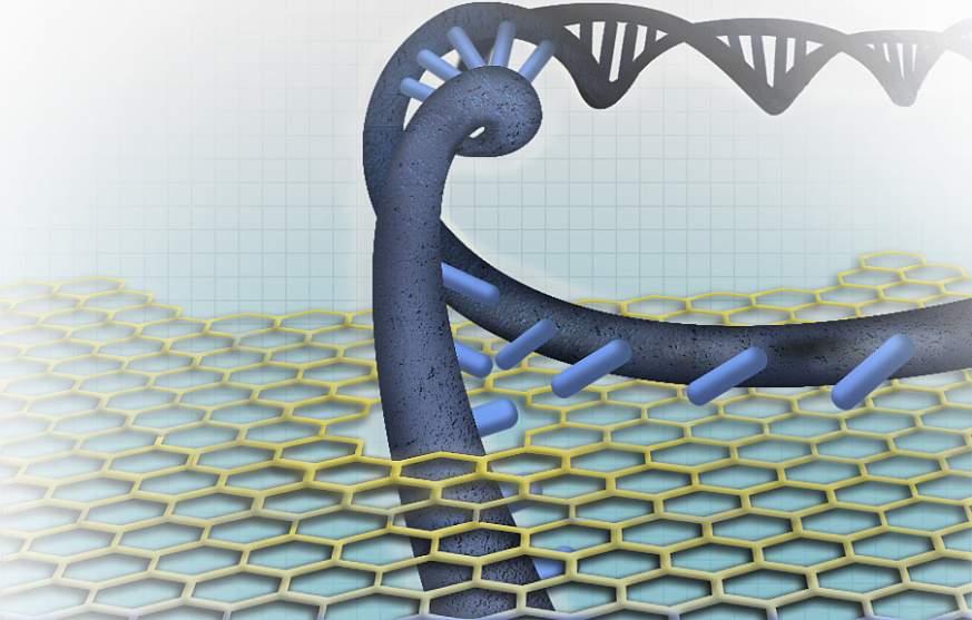 Nanopore sequencing image