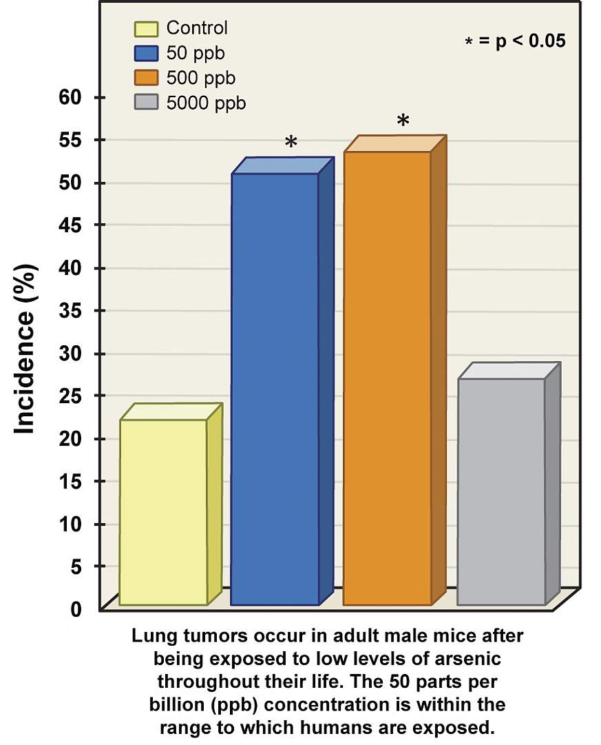 A chart showing cancer incidence among study subject