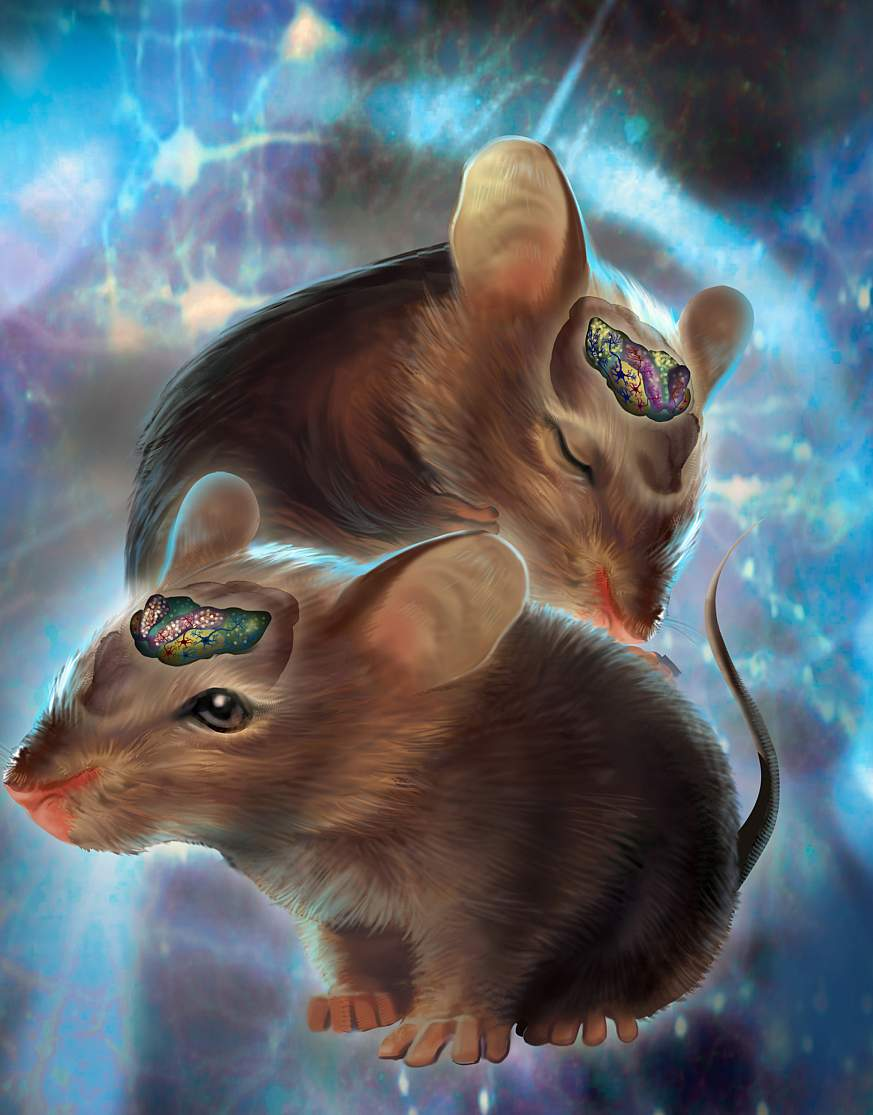 An illustration of mice