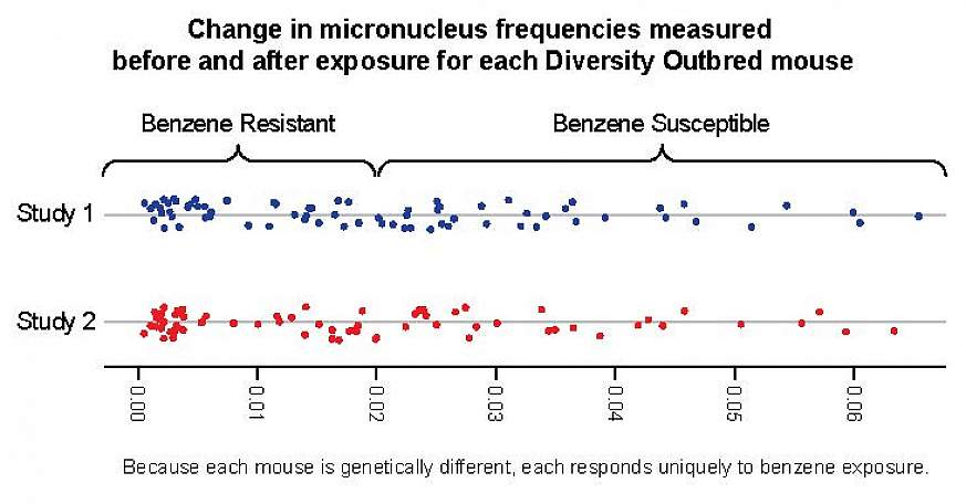 A graph showing how mice react to benzene exposure.