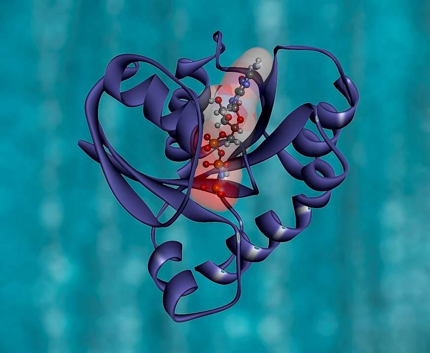 KRAS protein structure