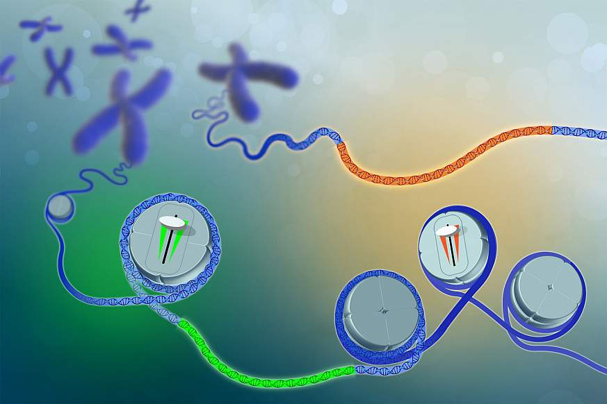 Illustration of DNA and chromosomes with dimmer switch