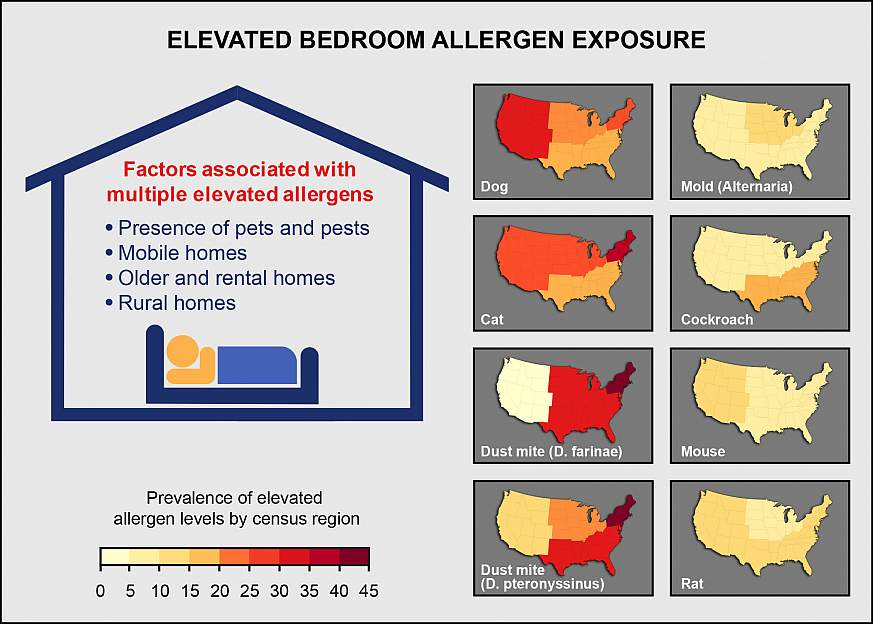 Graphic of contributors to elevated allergen bedroom allergen levels