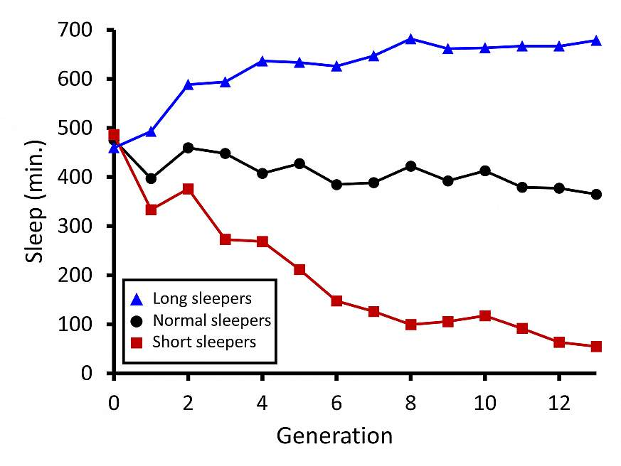 graph showing sleep duration of fruit flies