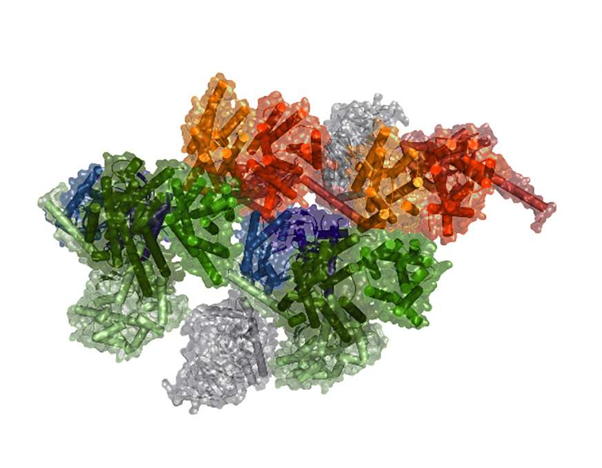 Image of a model of a macromolecular complex