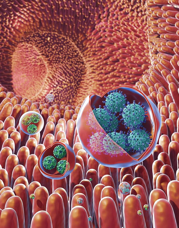 Illustration of virus clusters