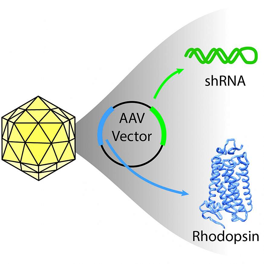 Illustration of icosahedral virus capsid
