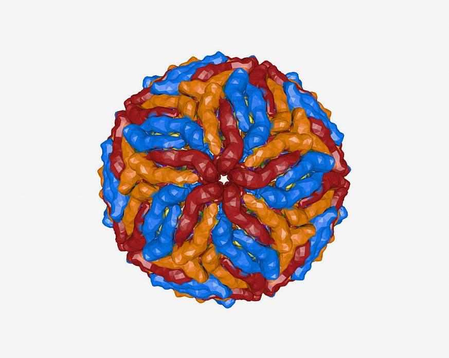 Zika virus model