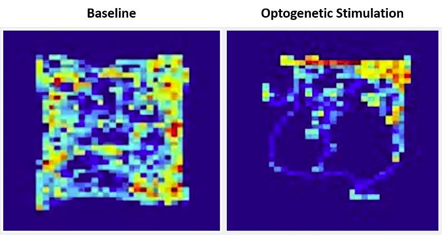 Two square-shaped multicolored heat maps showing color variation representing the time a mouse spent in parts of the open field chamber during baseline and optogenetic stimulation.