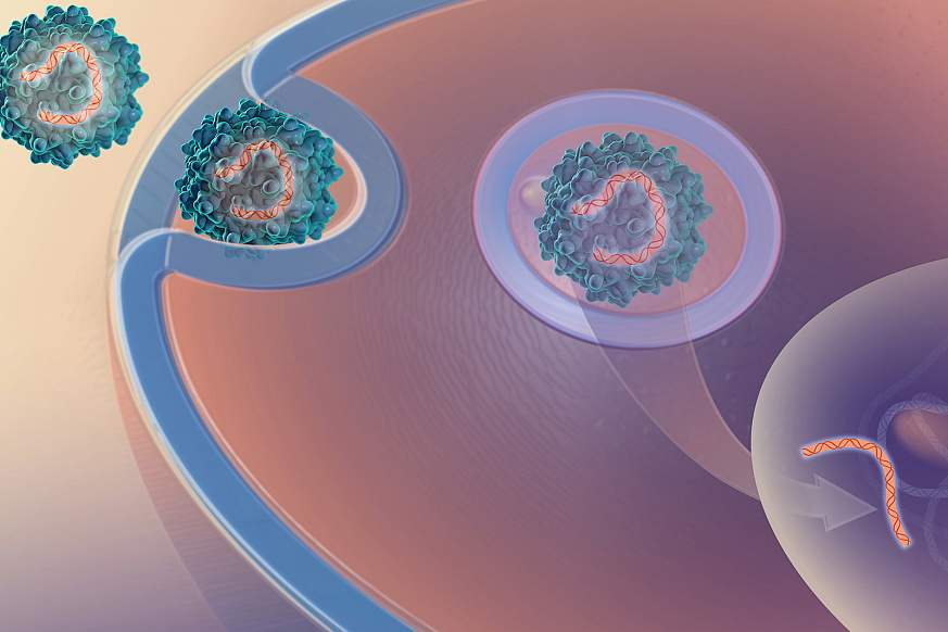 Illustration of a virus delivering genetic material into a cell