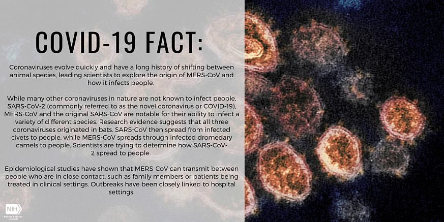 COVID-19 Fact: coronaviruses evolve quickly