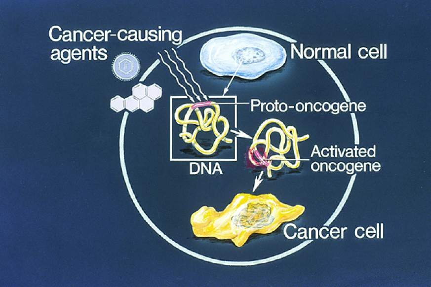Diagram showing how genetic changes cause normal cells to become cancerous.