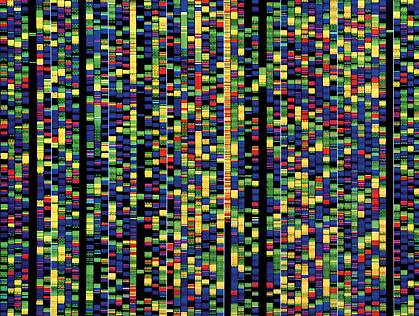 These colored bands on a computer screen represent the various building blocks of DNA that make up just a small portion of the human genome.