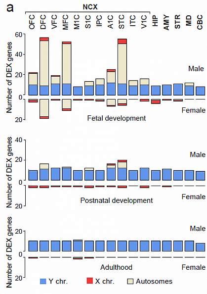 Sex-biased gene expression.