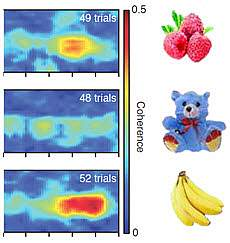 In-sync brain waves encode short-term memory of objects