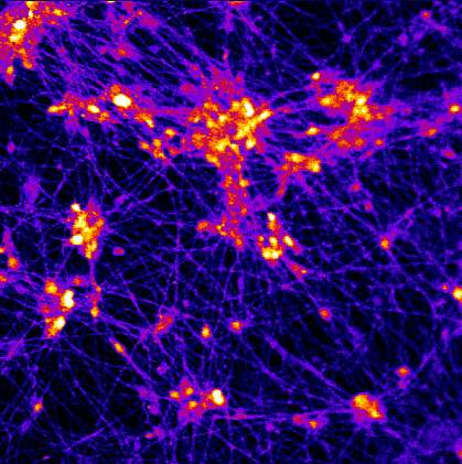 Image of neurons on 3D scaffold