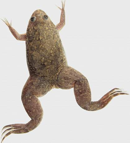Photo of a frog