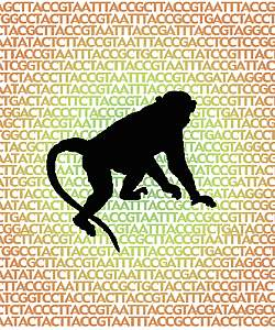 Silhouette of rhesus macaque on a background of the letters A, C, T, and G, which represent the chemical components of the genome