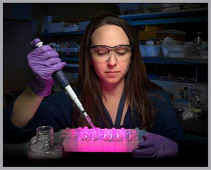 Photo of female scientist using pipette to transfer liquid samples to small containers in a tray