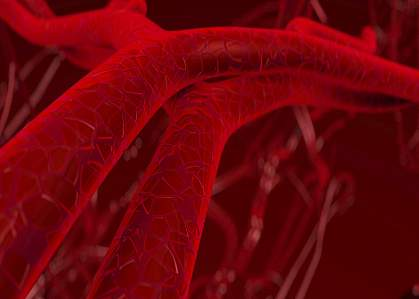 IStylized 3D illustration of blood vessels
