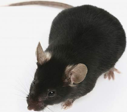 a photo of a mouse