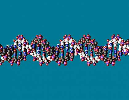 Molecular model showing short piece of a DNA double helix