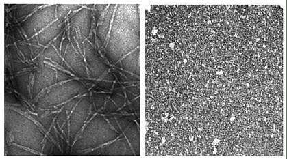Panel on left shows network of long fibers.  Panel on right shows grainy material with no trace of fibers