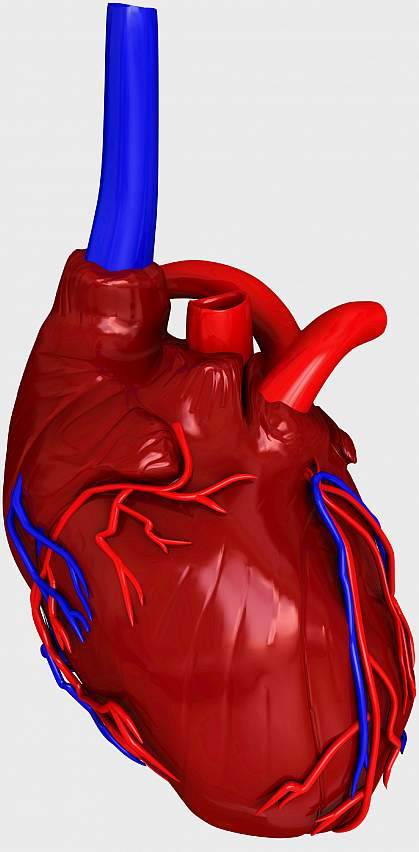 Illustration of a heart showing a grey damaged area