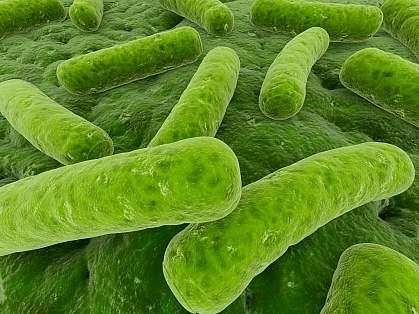 Scanning electron micrograph of microbes that may be found in the gut