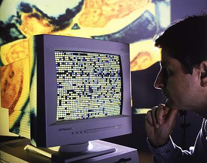 Photo of scientist examining computer monitor