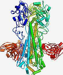 Structural drawing showing a protein stalk with red and orange blobs on either side
