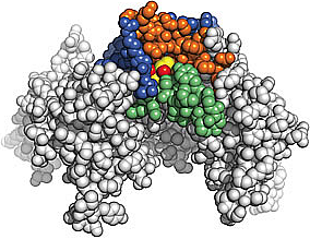 Illustation of an alcohol molecule bound to a protein