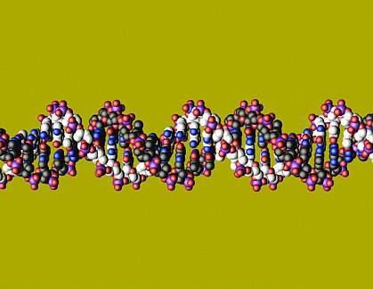 Molecular model of DNA