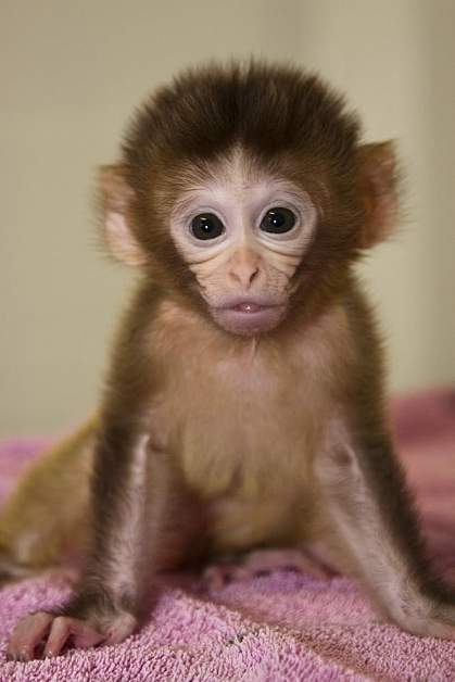 Photo of a baby monkey